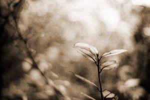 Mr B's Photography